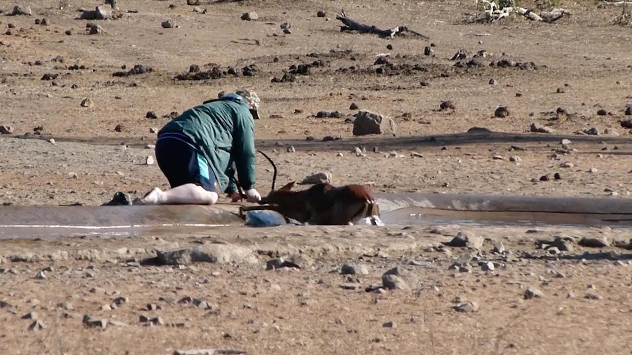 Man Rescues Impala From Mud 2