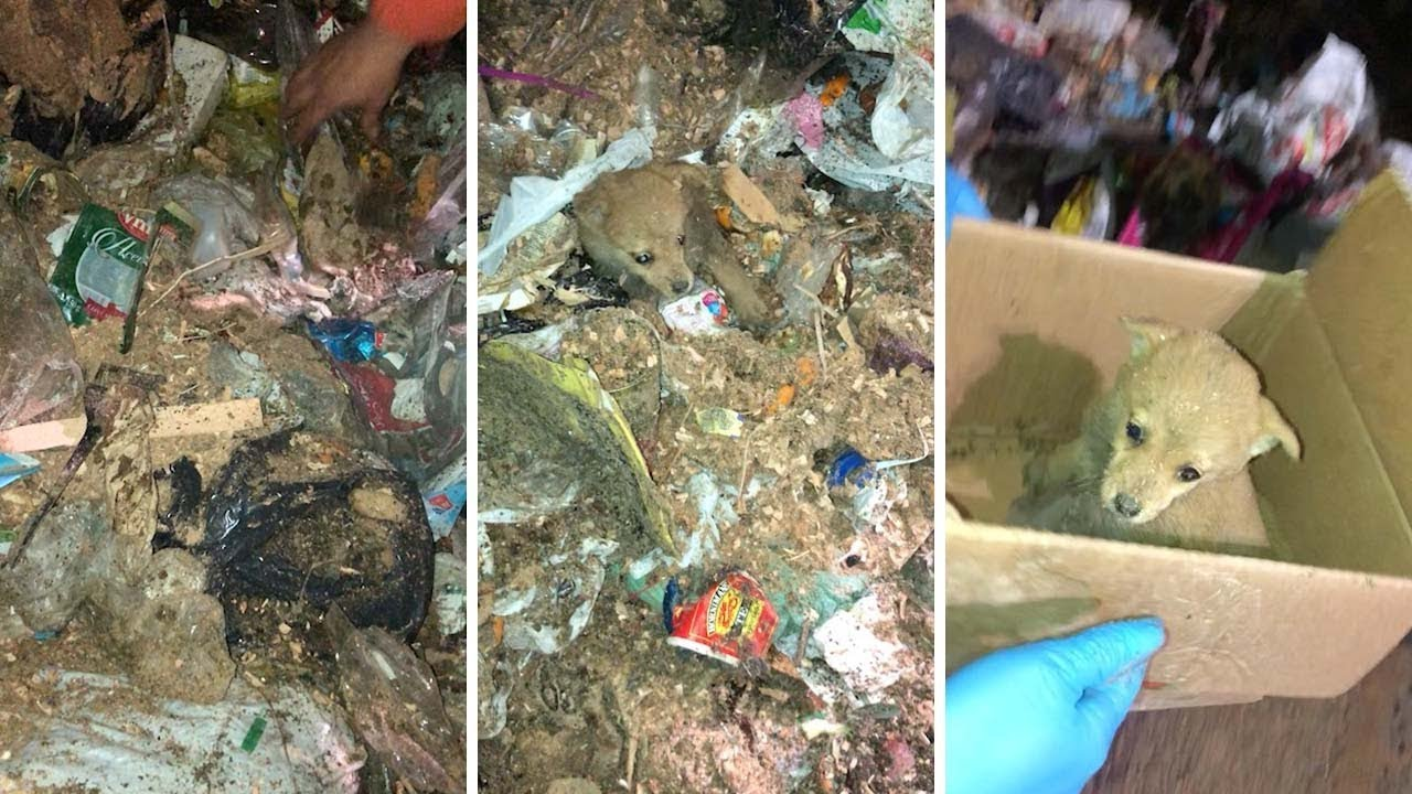 Adorable Puppy Gets Rescued From Pile Of Trash 1