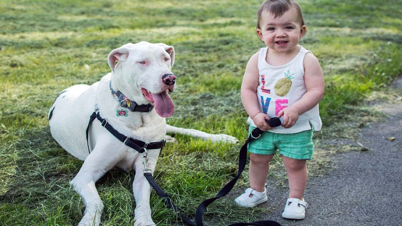 Deaf Dog Is Best Friends With Little Girl 5