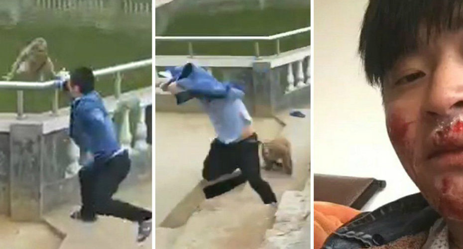 Monkey Got Swift Revenge On A Cheeky Tourist Who Pushed Him Into A Pond For A Laugh 2