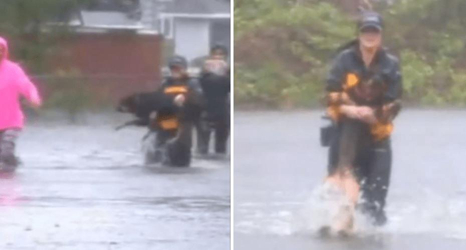 Reporter Interrupts Livestream To Help Rescue Dog From Hurricane Florence Flooding 1