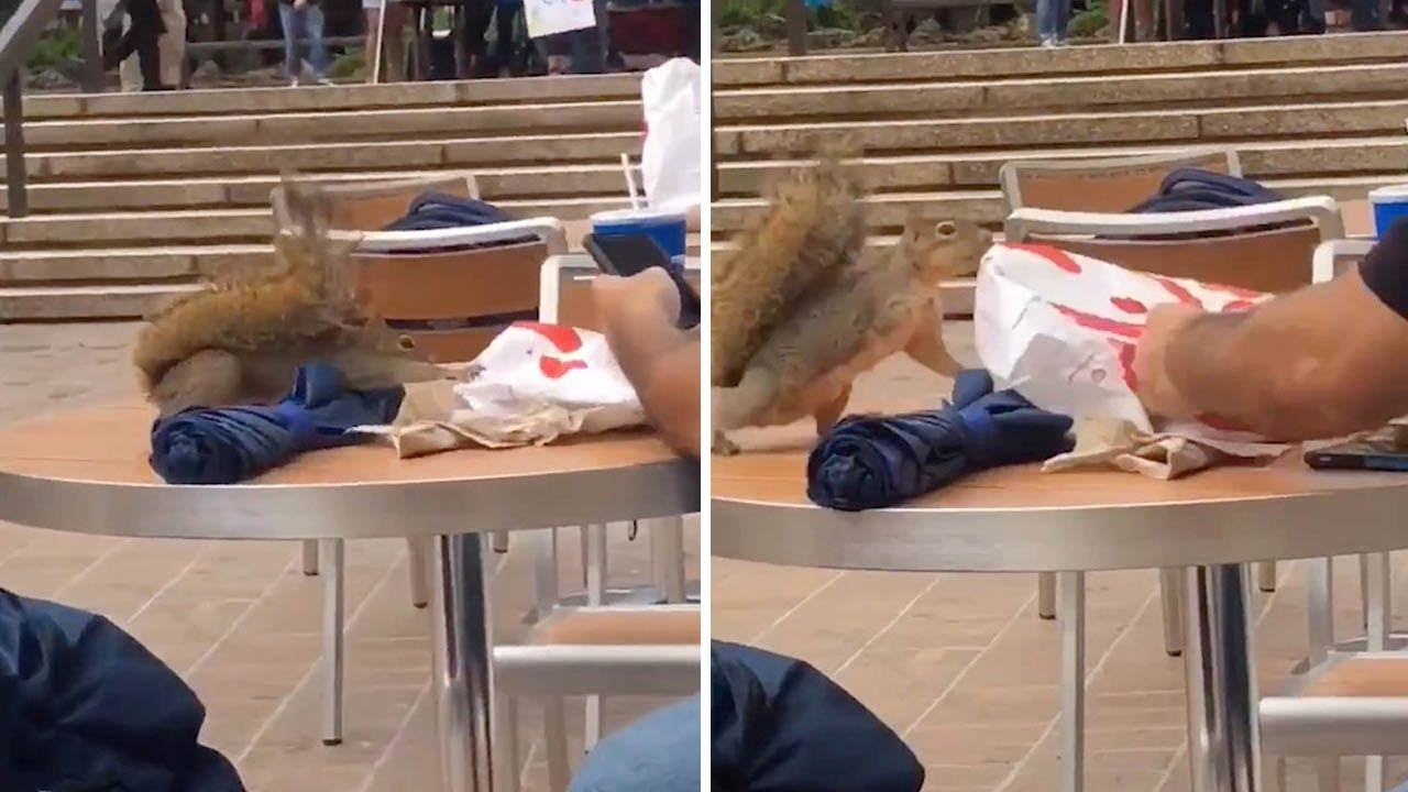 Squirrel Tries To Steal Food 1