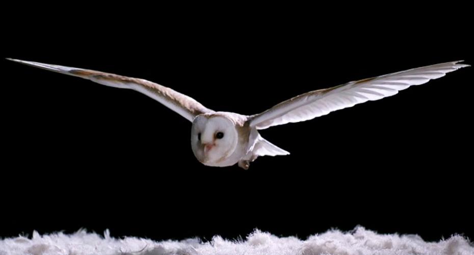 Owls' Silent Flight May Inspire Quiet Aircraft Tech 8