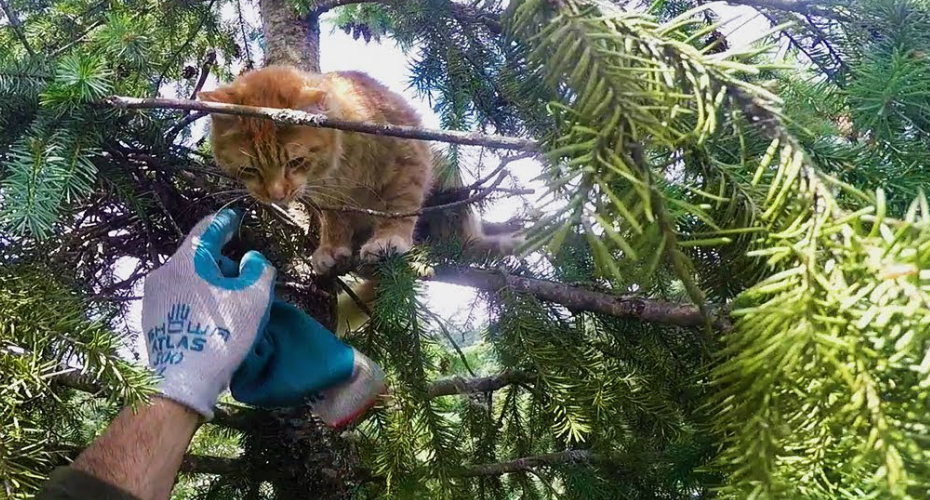 Rescuing Cats From Super Tall Trees 2