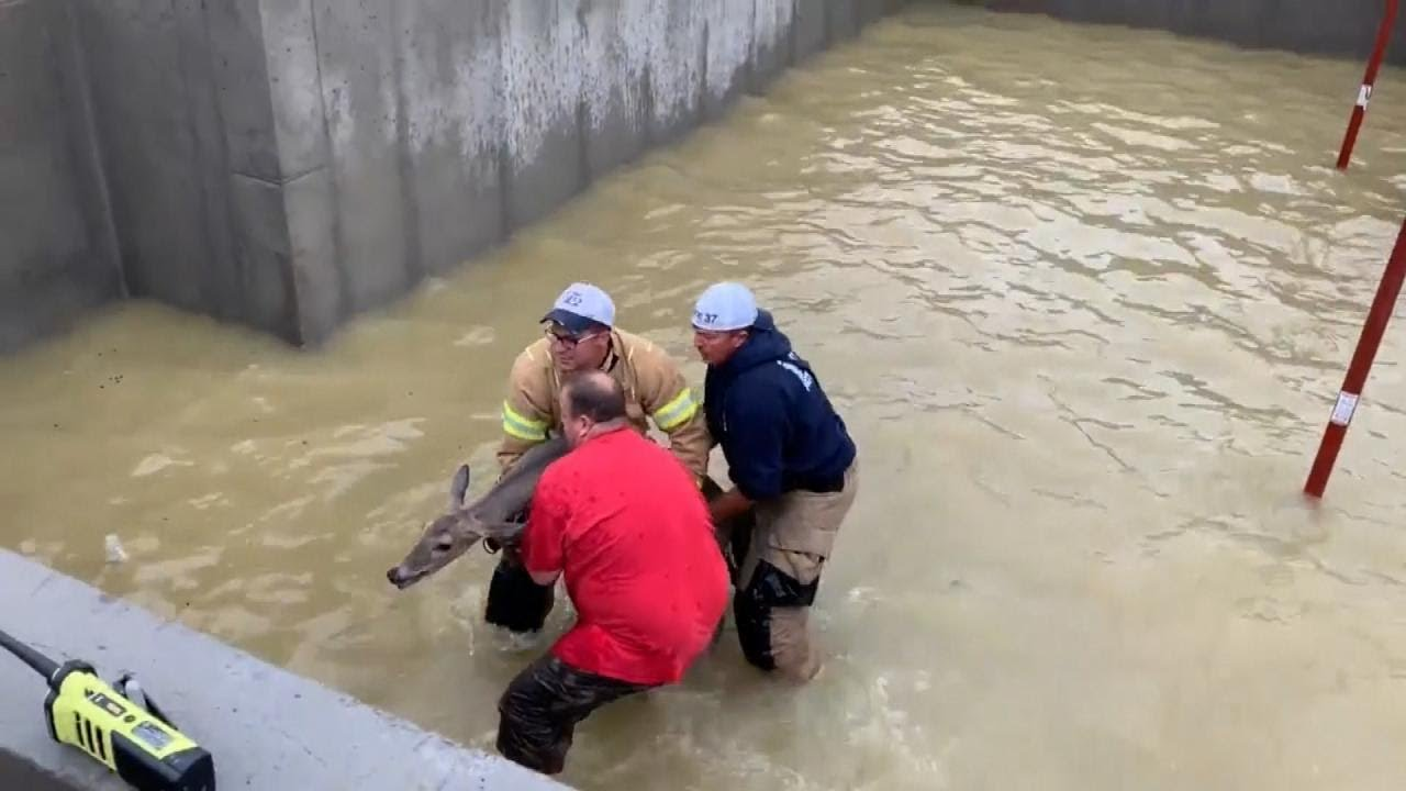 Firefighters Rescue Deer From Flooded Basement After Rainstorm 6