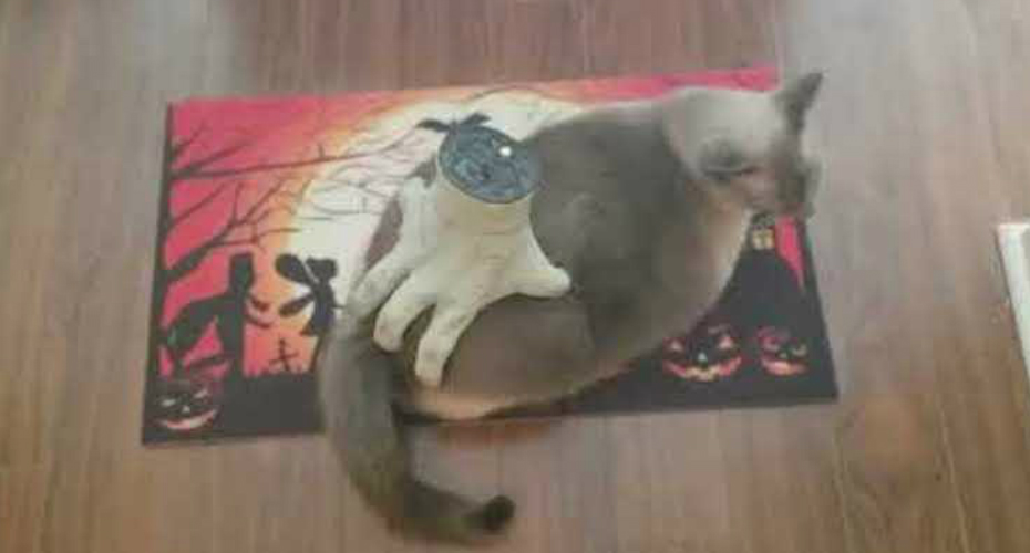 Cat Enjoys Massage From Creepy Halloween Hand 7