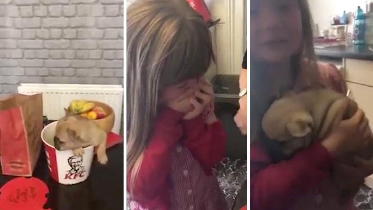 Adorable Girl Surprised With Puppy Disguised In KFC Bucket 1