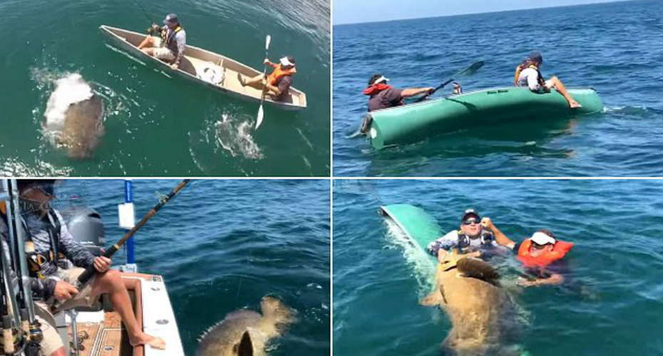 Fishermen Capsize Their Canoe While Reeling In Massive Grouper 3