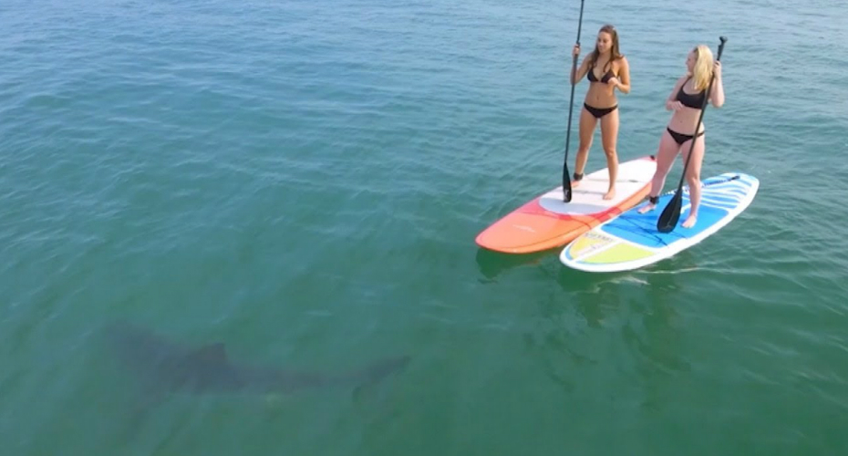 Great White Sharks Give Bikini-Clad Paddleboarders Scare of Their Lives 6