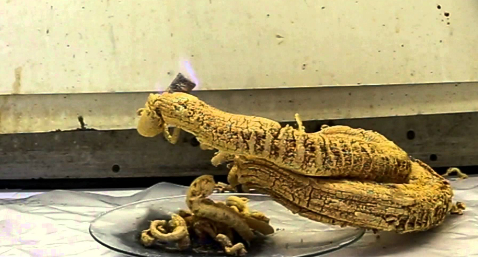 Pharaoh's Serpent Is The Scariest Science Experiment You Will See Today 5