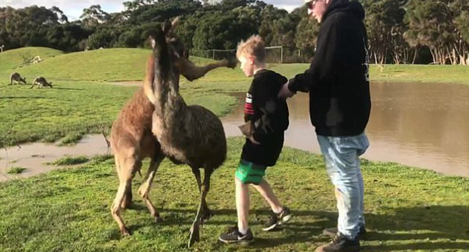 Little Boy Shocked When a Kangaroo Punches Him In The Face 8