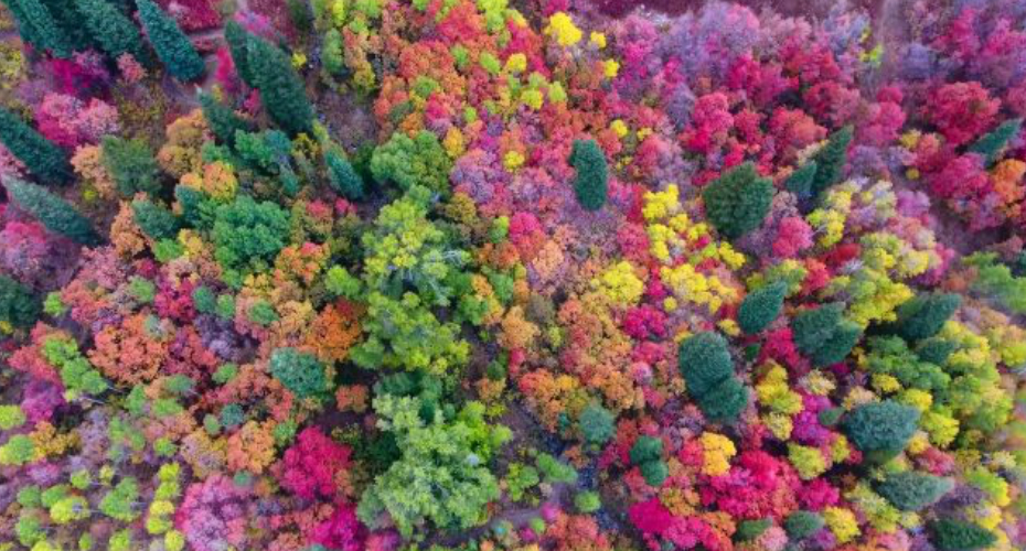 Mesmerizing Drone Footage Shows Fall Colors in Northern Utah 2