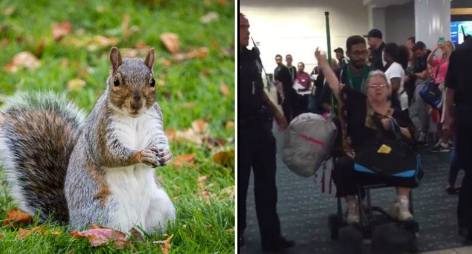 Passengers Cheer As A Woman Is Kicked Off Flight For Bringing Her Emotional Support Squirrel 6