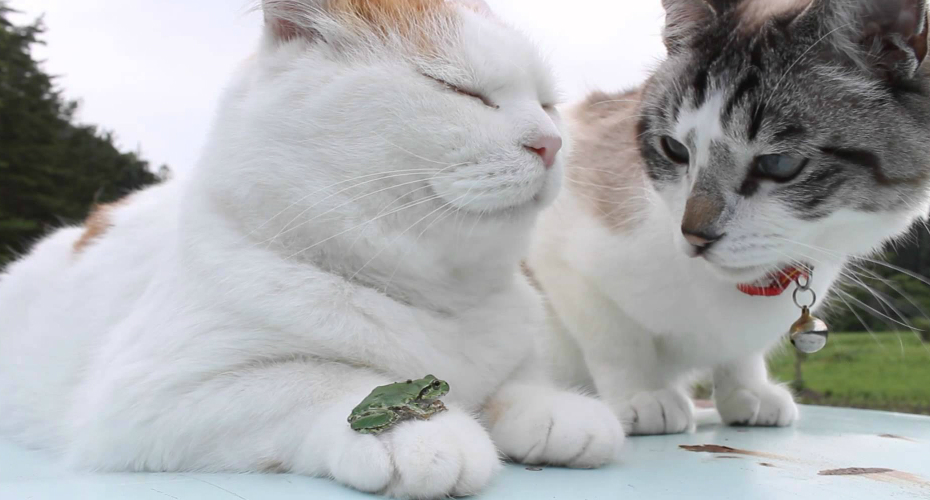 The Most Zen Cat Ever Chills With His Two Best Friends: Another Cat… And a Frog! 6