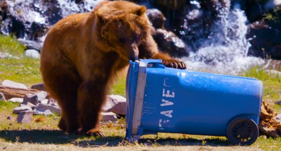 These Bears Put Your Household Items To The Test 9