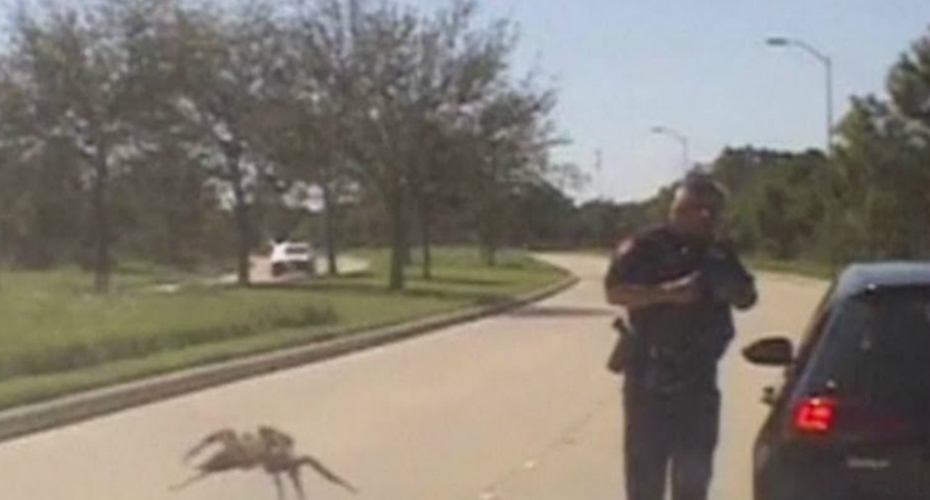 A Seemingly Giant Spider Appears To Cross A Street Towards A Texas Police Officer During A Traffic Stop 5