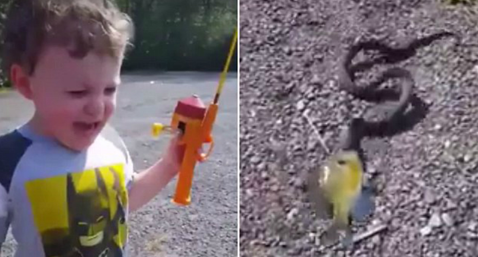 3 Year-Old Catches a Fish, Which Was Caught By a Snake 9