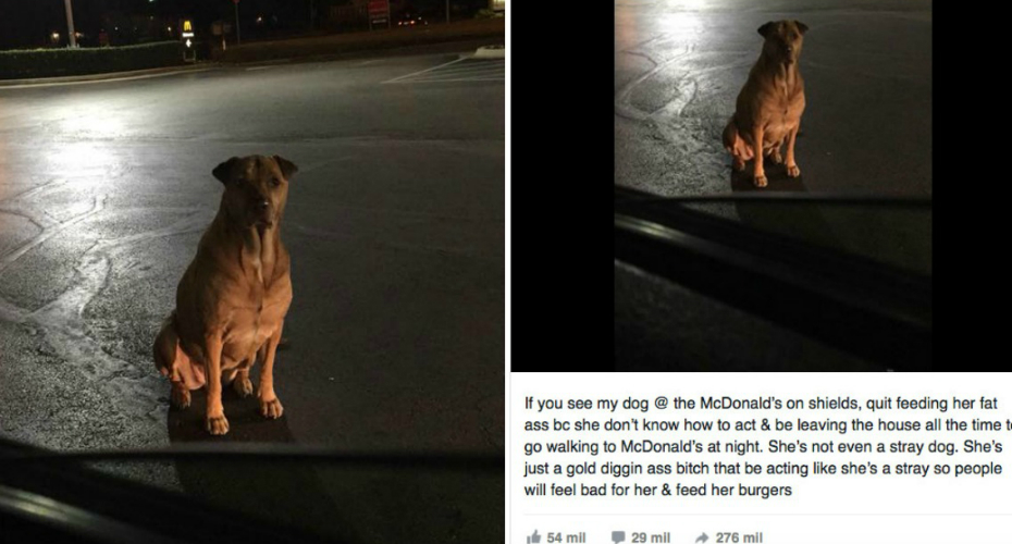 Gold Digging Dog Pretends To Be A Stray In Order To Get Burgers 4