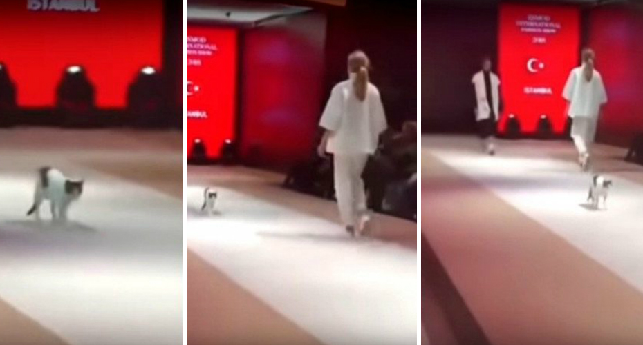 Fashionable Feline Owns The 'Catwalk' During Runway Show 6