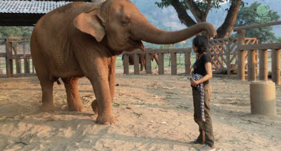 Woman Serenades An Elephant To Sleep With a Sweet Lullaby 5