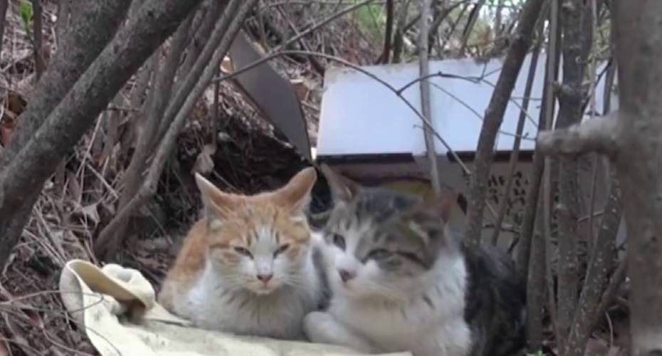 A Wonderfully Devoted Cat Who Fiercely Protects And Cares For His Disabled Feline Friend 2
