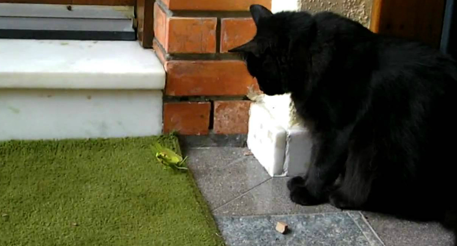 This Is What Happens When a Cat Takes On a Preying Mantis 7