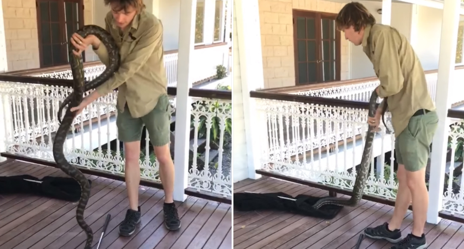 A Large 9-Foot Python Found on a Deck Slithers Into Bag Itself Without The Snake Catcher's Help 1