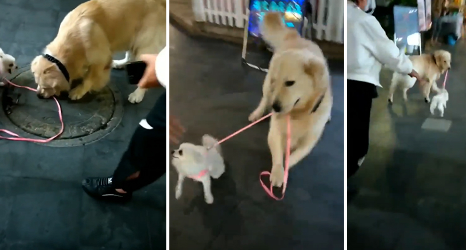 Dog Steals Smaller Dog And Makes A Break For It 7