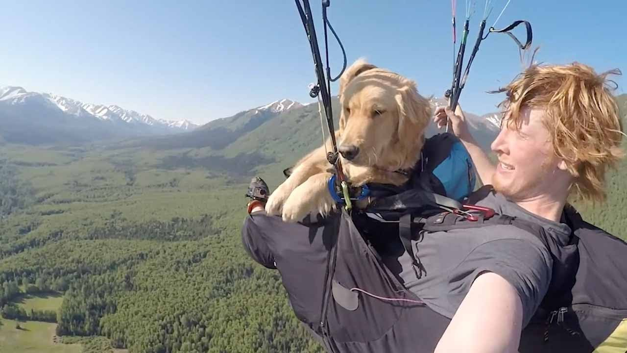 Golden Retreiver Puppy Becomes World's Most Travelled Pooch 9