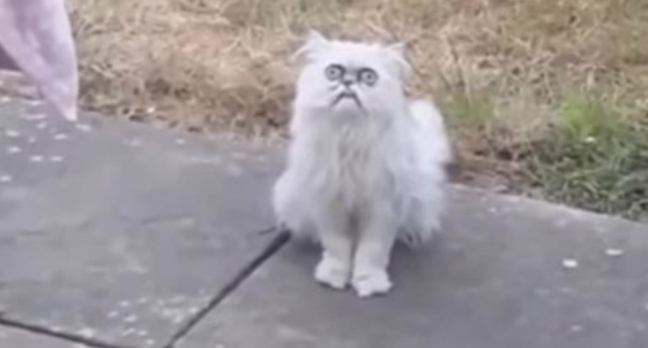 Man Freak Out When Standing Face To Face With Crazy Looking Cat At His Mom's House 5