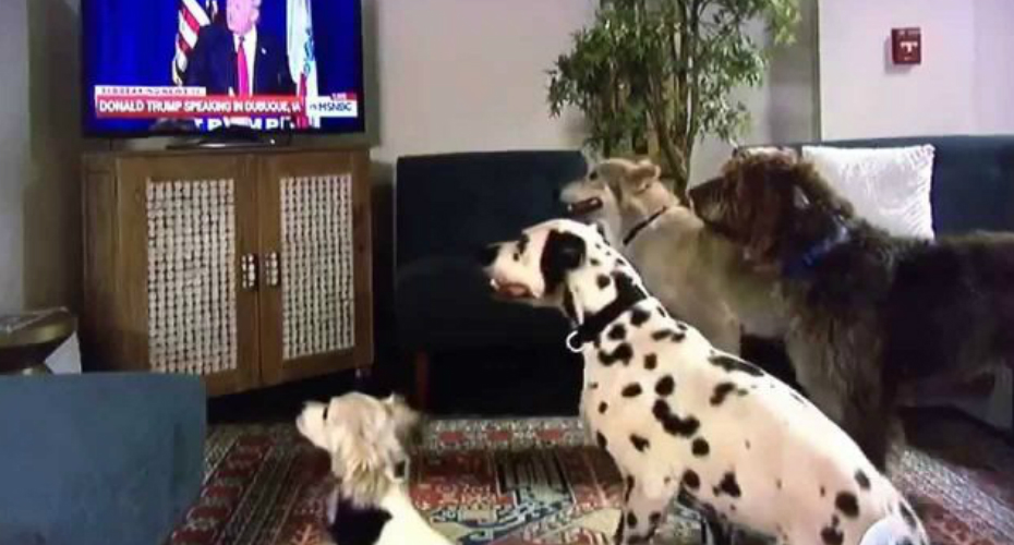 Donald Trump Makes Dogs Sit On Command Via TV 3