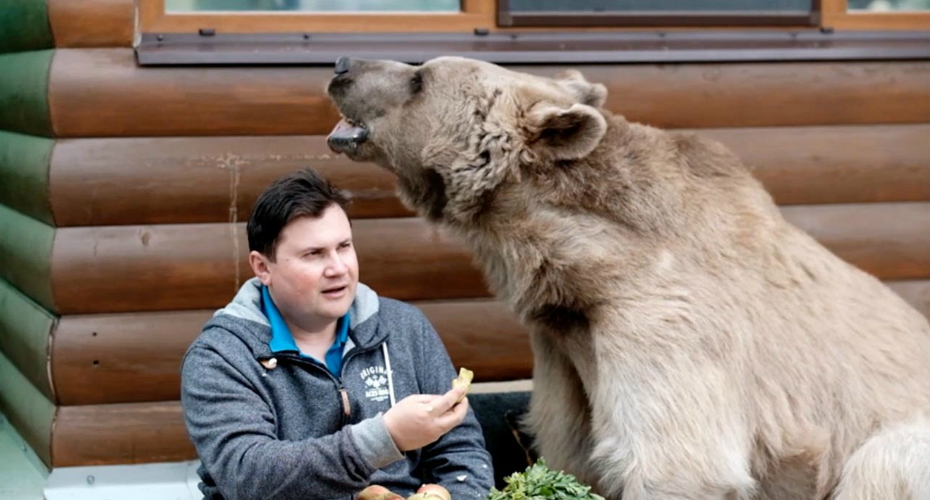 Russian Family Live With A Bear In Their House, Treat Him The Same As Any Loveable Pet 9