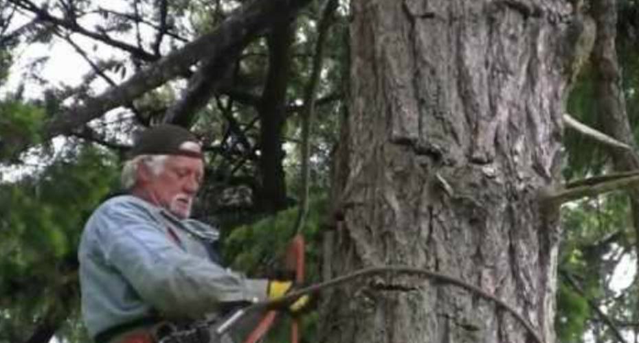 Man Saves Bald Eagle Caught In Kite String 40 Feet High In Tree 4