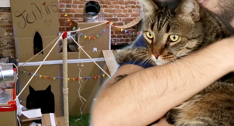 Man Build The World's Greatest Cat Fort for His Cat 7