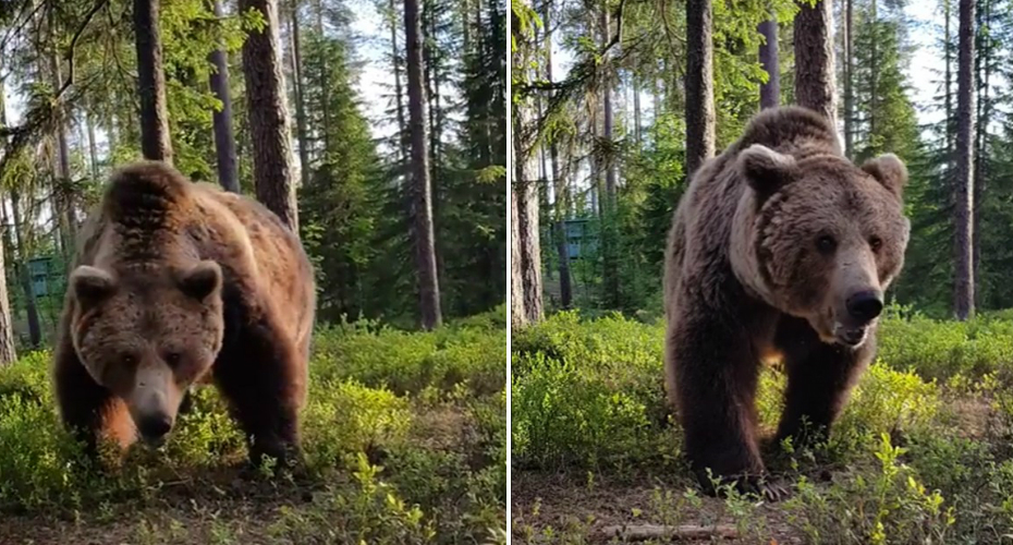 Family Has Close Encounter With A 13ft Bear 7