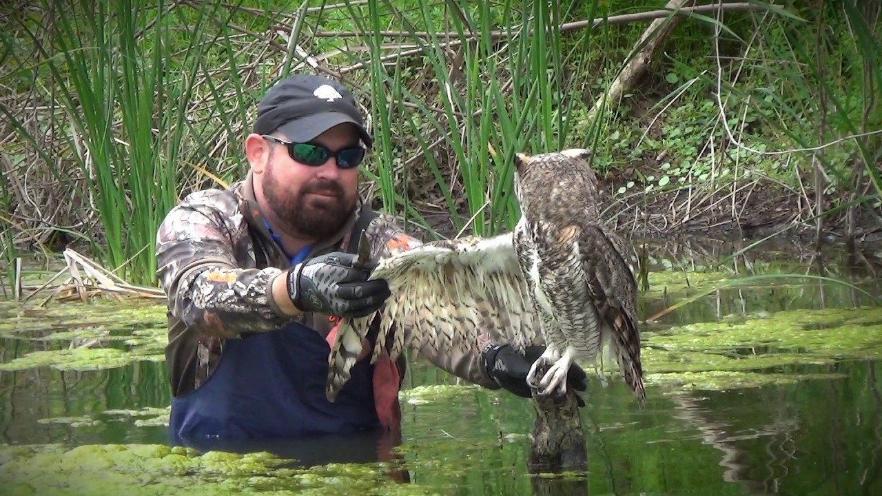 Kind Man Saves Owl At Golf Course 6