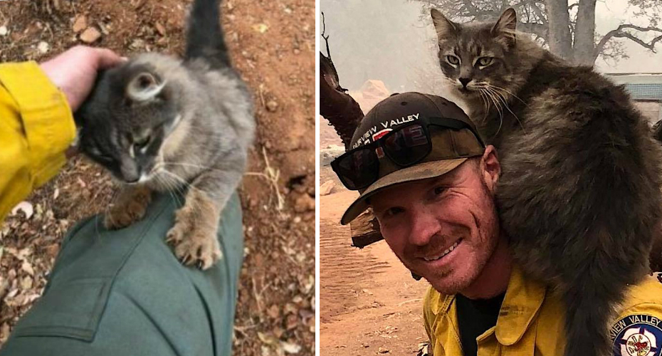 Cat Who Survived The Paradise, California Fire Rides Upon The Shoulders Of The Firefighter Who Saved Him 3