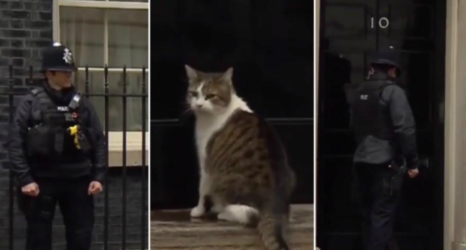 Police Officer Knocks On No10 Door So Downing Street Cat Can Be Let In During Live TV Broadcast On Brexit 8