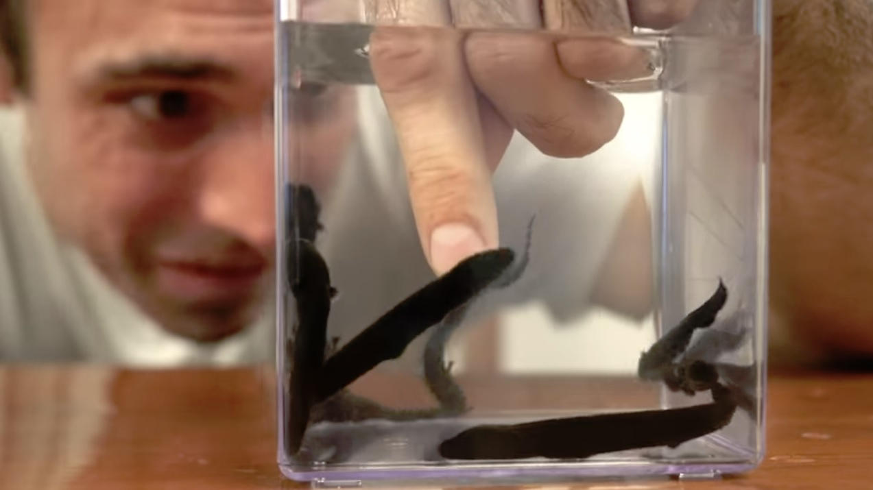 Man Greatly Underestimates The Electric Pulses Of Electric Eel Babies 3