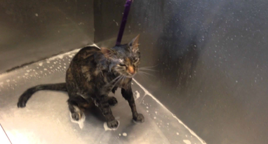 Cat Pleads 'No More' During Bath Time 2
