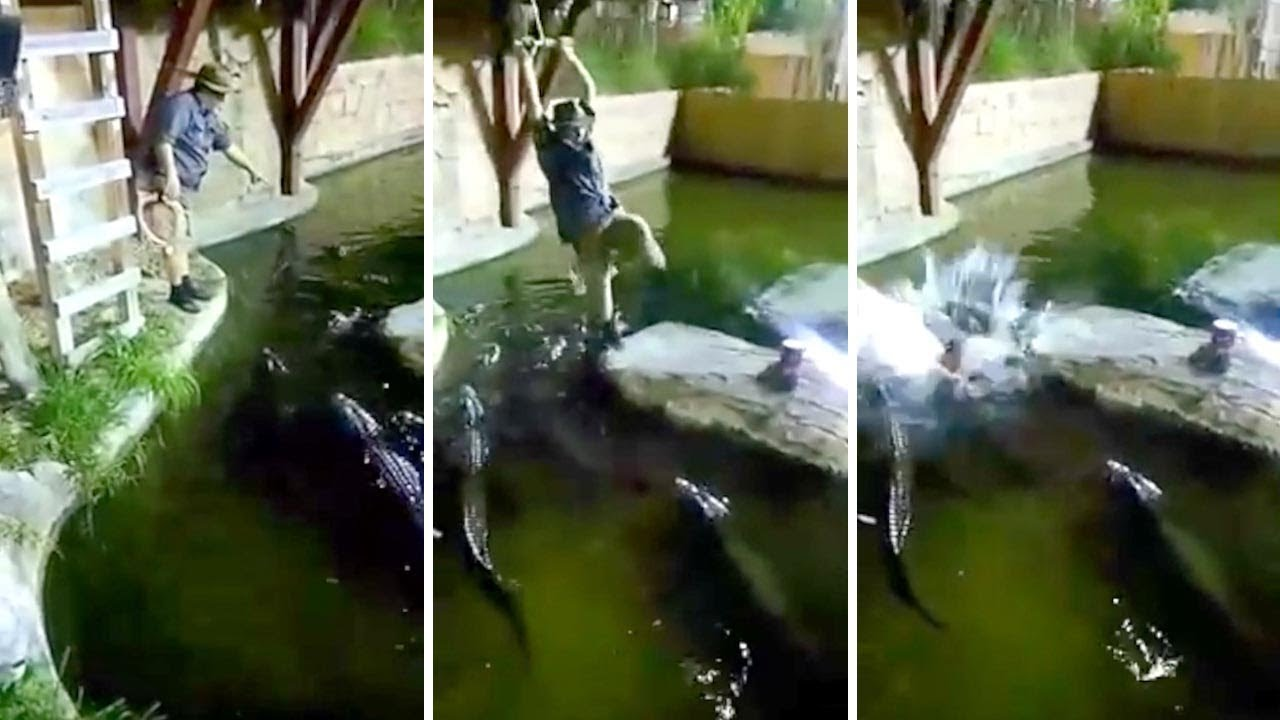 Guy Falls In Alligator Pool After Rope Swing Goes Wrong 7