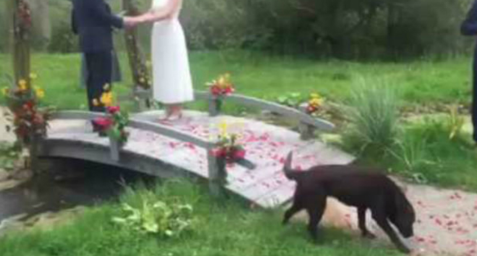Random Dog Crashes Wedding Mid-Vows And Jumps Into The Pond Like It's No Big Deal 1