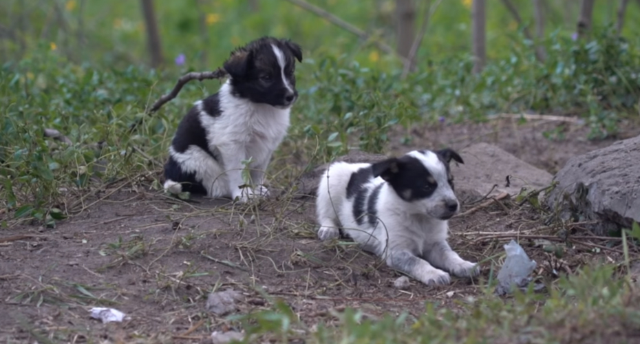 The Sad Reason You Can't Pet The Radioactive Puppies Of Chernobyl 7