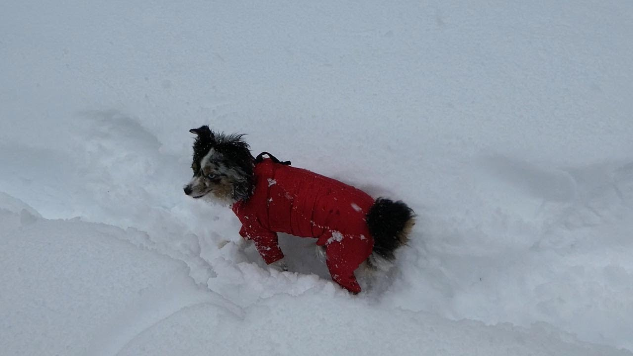 Dog Forced To Wear Onesie In Snow So She Doesn't Turn Into Snowball 4