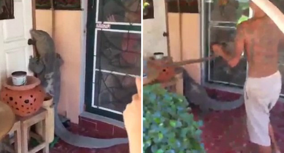 Giant Monitor Lizard Tries To Break Into Thai Home As Horrified Family Looks On 1