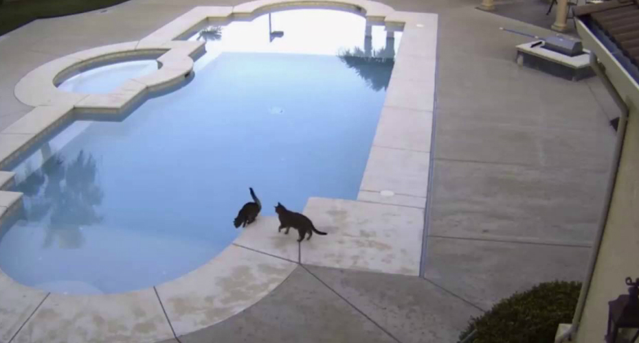 Pool Security Camera Captures Priceless Cat On Cat Prank 5