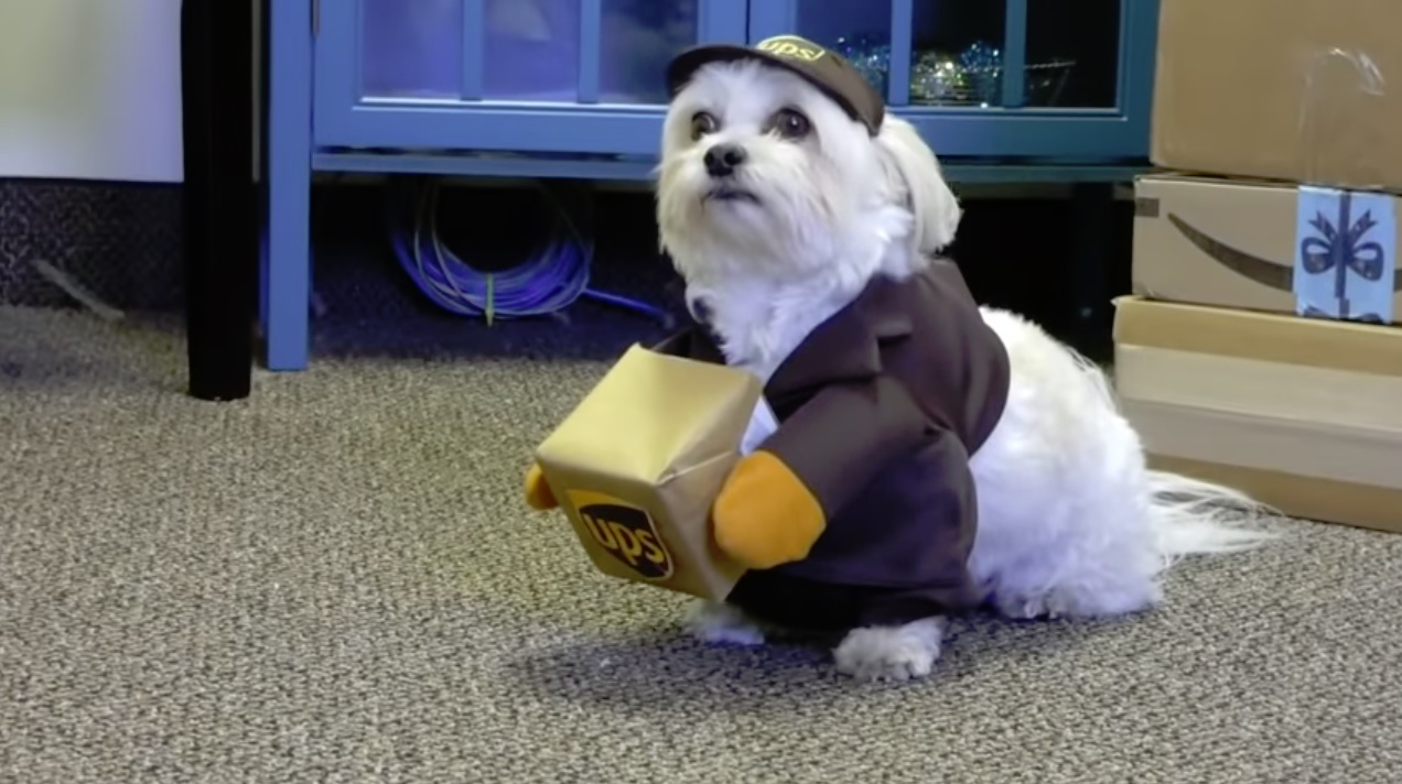 Delivery Dog Surprises Delivery Driver 9