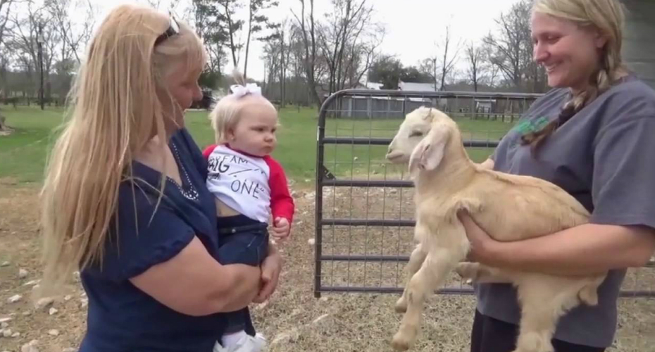 Cute Baby Is A Natural Goat Whisperer 4
