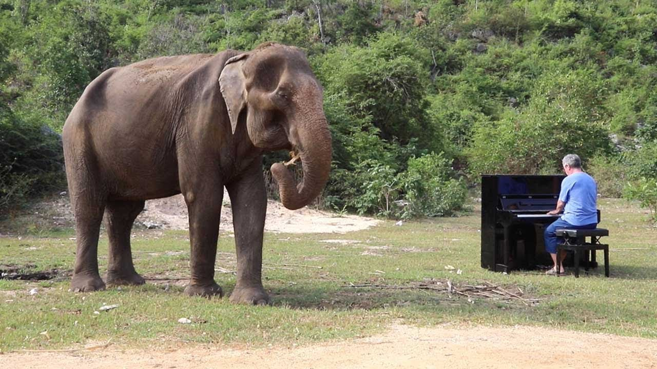 Talented Pianist Plays Christmas Songs For Blind And Old Elephants 8