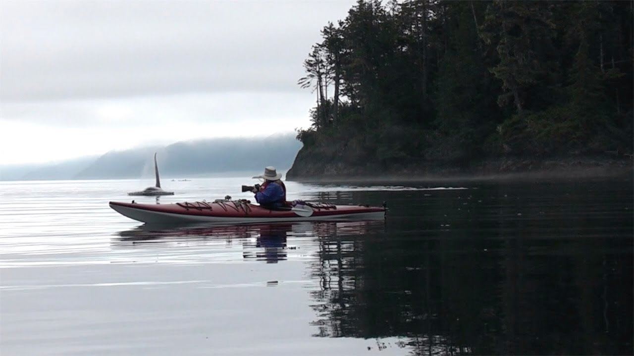 Kayakers' Incredibly Close Encounter With Orcas 1